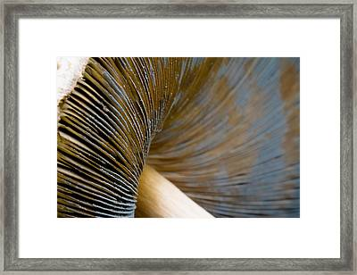 Framed Print featuring the photograph Psychedelic by Annette Hugen
