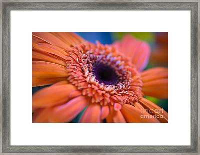 Psychedelic Framed Print by Charles Dobbs