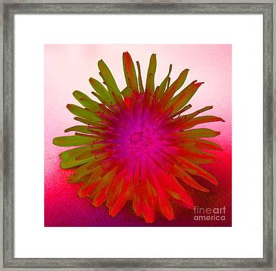 Psychedelic Daisy 4 Framed Print by Carol Lynch