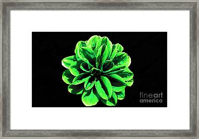 Framed Print featuring the photograph Psychedelic Flower 3 by Sarah Mullin