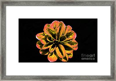 Psychedelic Flower 8 Framed Print by Sarah Mullin