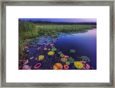 Psychedelic Shore - Great Meadows Nwr Framed Print by Sylvia J Zarco