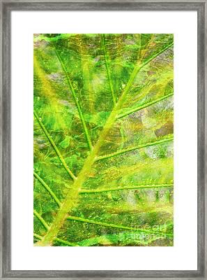 Psychedelic Venation Framed Print by Floyd Menezes