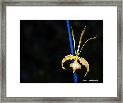 Psychopsis - Butterfly Orchids Framed Print