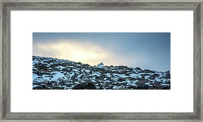 Ptarmigans In The Sunset, Lagopus Muta Framed Print