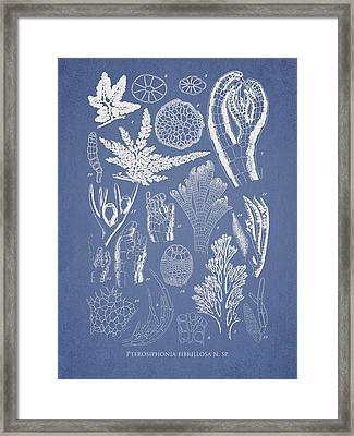 Pterosiphonia Fibrillosa Framed Print by Aged Pixel