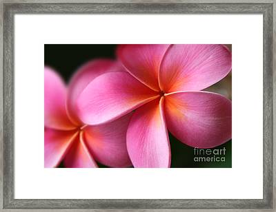 Framed Print featuring the photograph Pua Lei Aloha Cherished Blossom Pink Tropical Plumeria Hina Ma Lai Lena O Hawaii by Sharon Mau