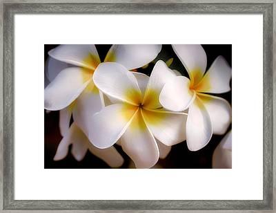 Pua Melia Ke'oke'o Framed Print