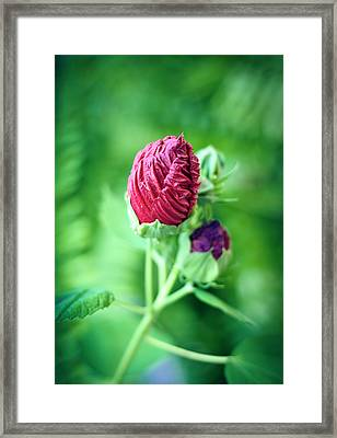 Pucker Up Framed Print by Christi Kraft