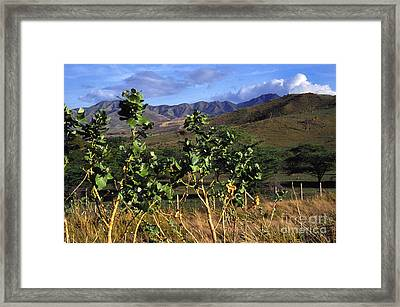 Puerto Rico Cayey Mountains Near Salinas Framed Print by Thomas R Fletcher