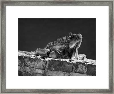 Puerto Rico Iguana 001 Bw Framed Print