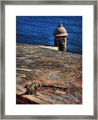 Puerto Rico Iguana 004 Framed Print by Lance Vaughn
