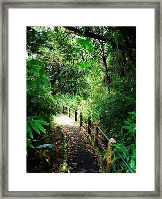 Puerto Rico, Luquillo, El Yunque Framed Print by Miva Stock