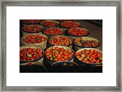 Puerto Rico Tomatoes Framed Print by Granger