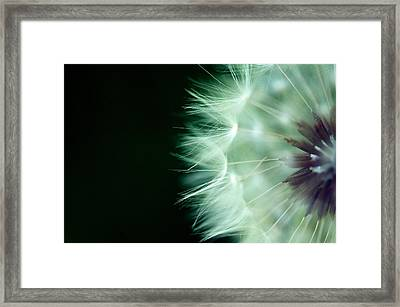 Puff Ball 1 Framed Print