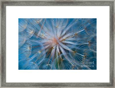 Puff-ball In Blue Framed Print