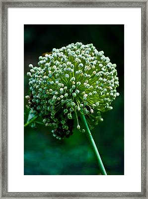 Puff Framed Print by Christi Kraft