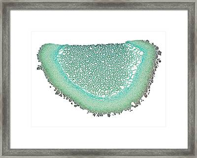 Puffball Mushroom Framed Print by Dr Keith Wheeler