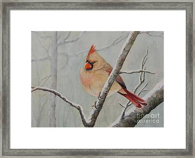 Puffed Up For Winters Wind Framed Print
