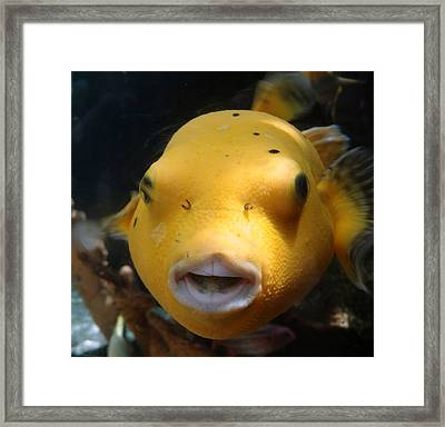 Puffer Poses Framed Print by Refresh  Photography