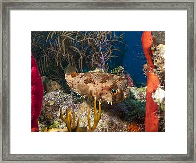 Puffer Retreat Framed Print by Jean Noren