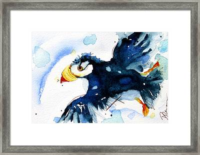 Puffin Flight Framed Print by Dawn Derman