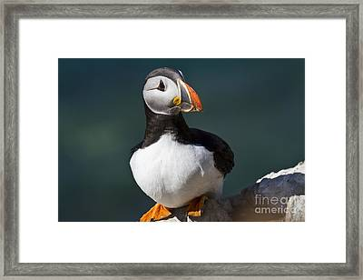 Puffin On The Edge Of The Rock Framed Print