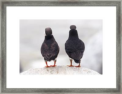 Puffin Philosophers Framed Print