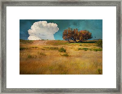 Puffy Cloud Framed Print by Carolyn Dalessandro