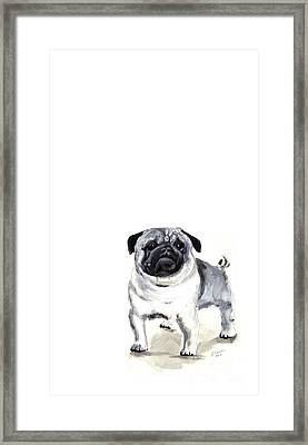 Pug 1 Framed Print by Barbara Marcus