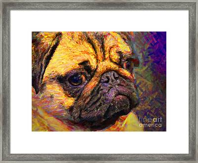 Pug 20130126v1 Framed Print by Wingsdomain Art and Photography