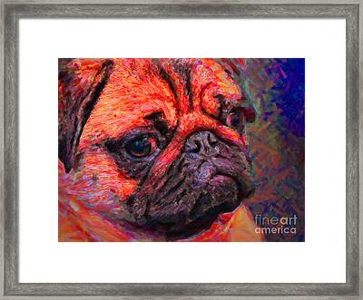 Pug 20130126v2 Framed Print by Wingsdomain Art and Photography
