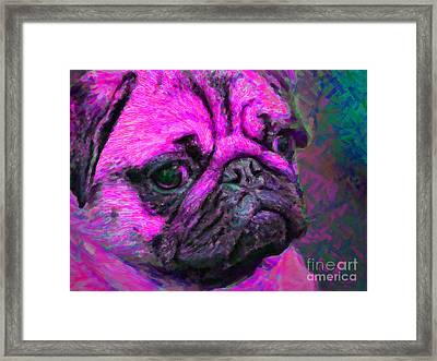 Pug 20130126v3 Framed Print by Wingsdomain Art and Photography