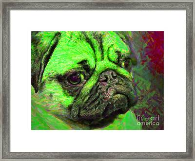 Pug 20130126v4 Framed Print by Wingsdomain Art and Photography