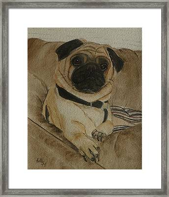 Pug Dog All Ready To Cuddle Framed Print