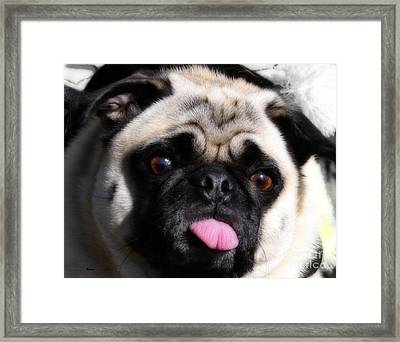 Pug Face Framed Print by Steven Digman