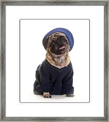 Pug In Sweater And Hat Framed Print