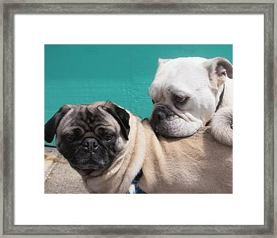 Pug Love Framed Print by DerekTXFactor Creative