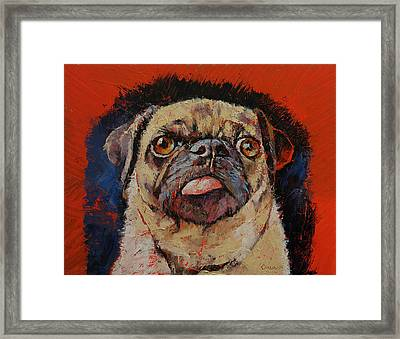 Pug Portrait Framed Print by Michael Creese