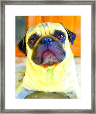 Pug Painting Framed Print by Iain McDonald