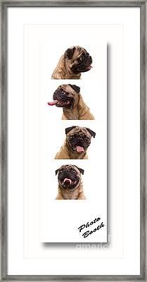 Pug Photo Booth Framed Print