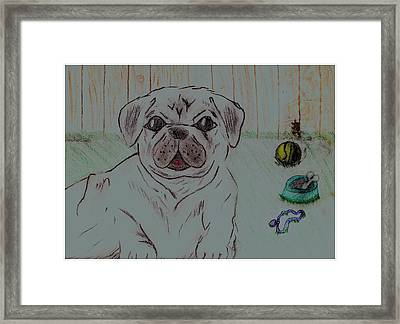 Pug Yard Framed Print