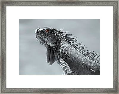 Pugnacious Framed Print by Patrick Witz