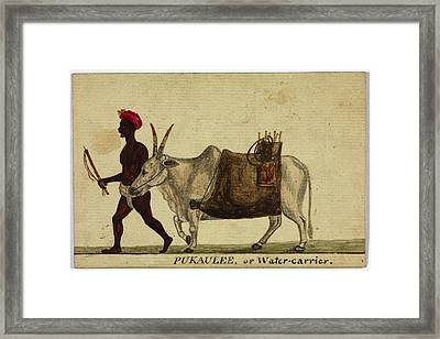 Pukaulee Framed Print