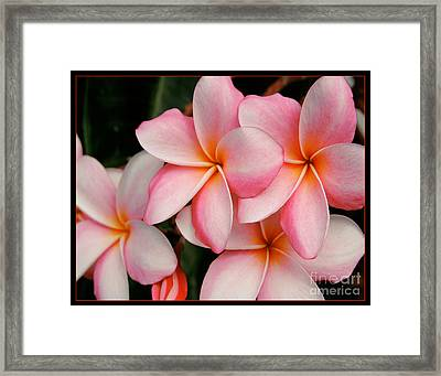 Pulmeria Framed Print by David Taylor