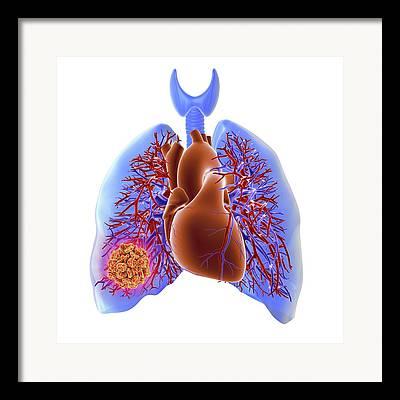 Pulmonary Vein Framed Prints