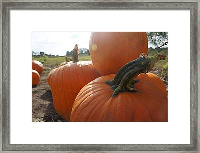 Framed Print featuring the photograph Pumkin Patch by Artistic Panda