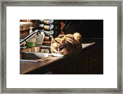 Pum'kins Sunbeam Framed Print