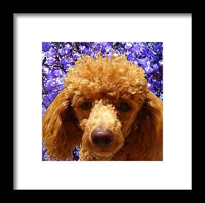 Dog Digital Art Framed Prints