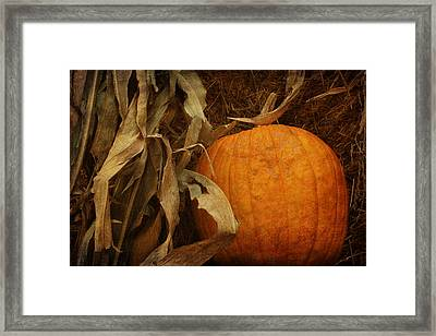Pumpkin And Cornstalks Framed Print by Nikolyn McDonald
